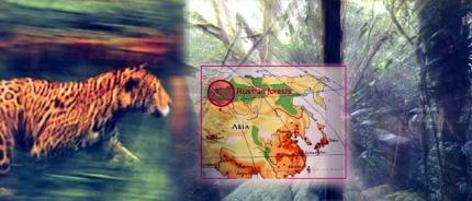 Urwald in Russland